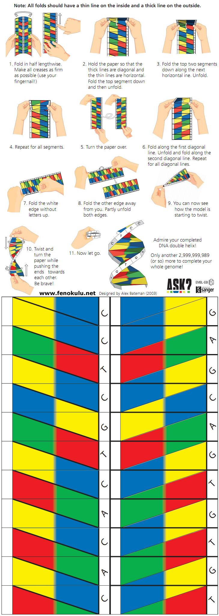 origami dna model Twentyhueandico – Dna Model Worksheet