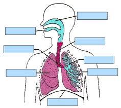 6. Sınıf Ders Çalışma Kitabı Vücudumuzda Sistemler Ünitesi 21-23. Etkinlik Sunusu