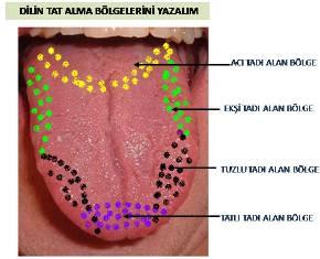 Duyu organları alternatif etkinlikler