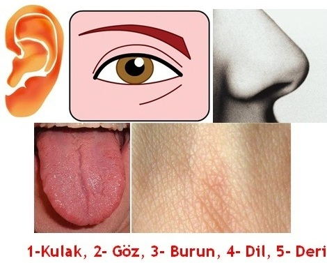 Beş Duyumuz Göz, Kulak, Dil, Burun ve  Deri