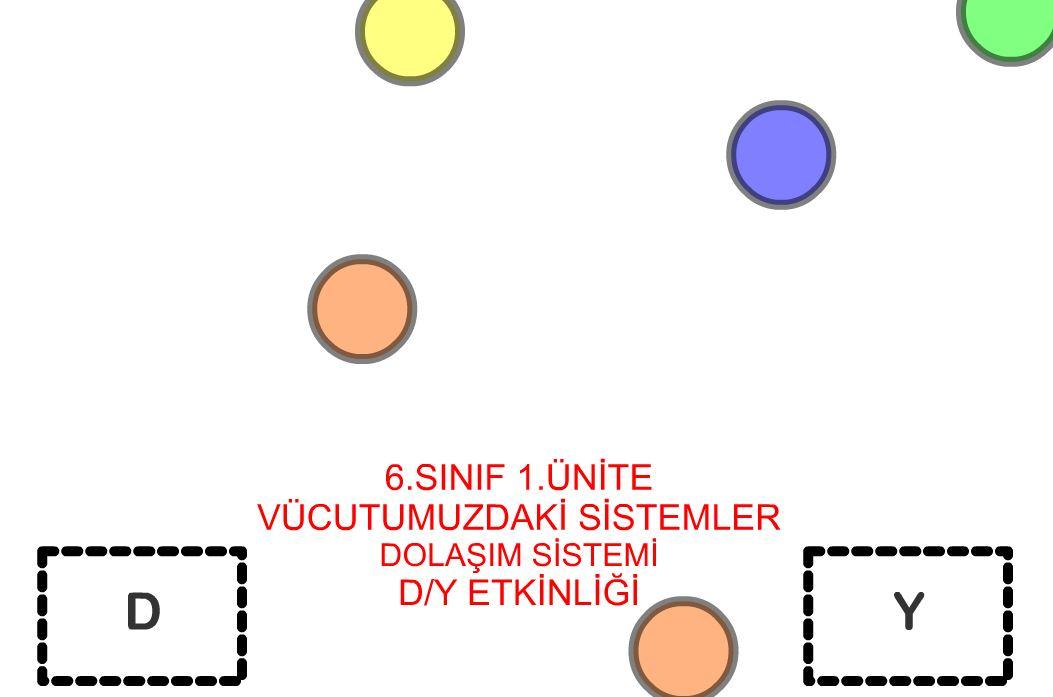 6 Sınıf 1.Ünite Dolaşım Sistemi  D/Y Etkinliği
