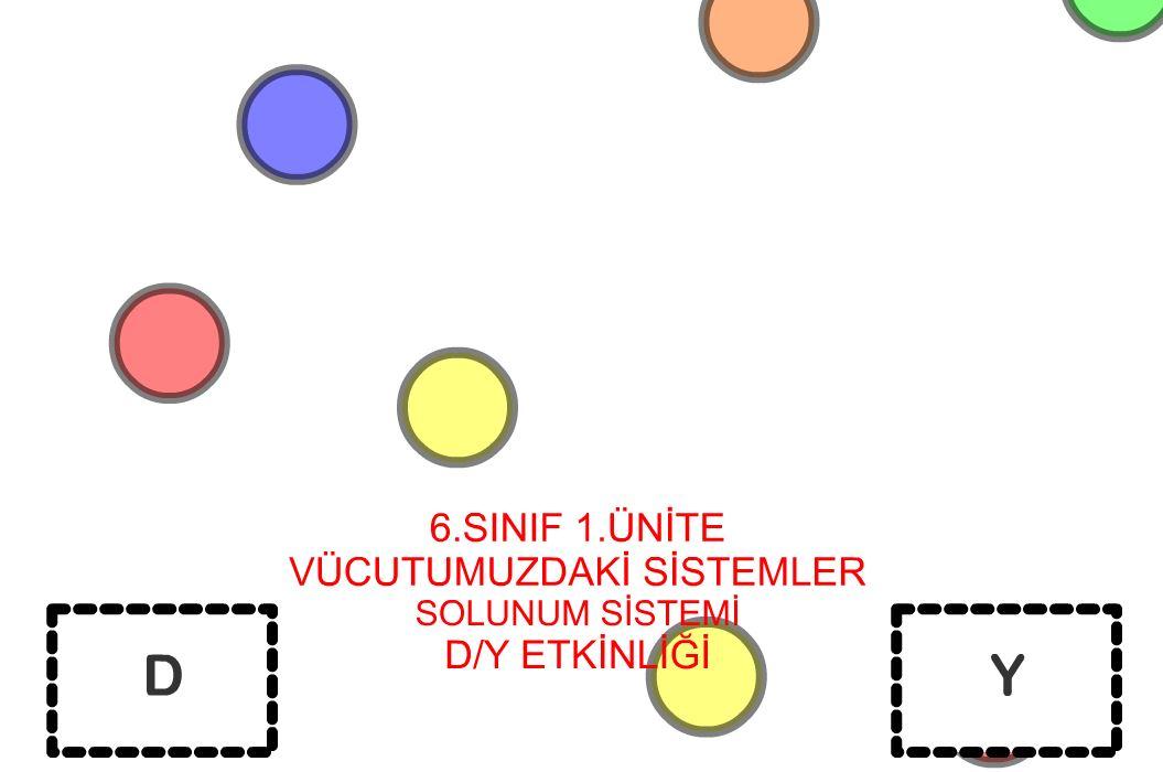 6 Sınıf 1.Ünite Solunum Sistemi D/Y