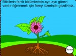 Bitkilerin Bölümleri ve İhtiyacları