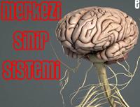 Merkezi Sinir Sistemi Animasyonları