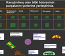 Bitki Organellerinin Yerleştirilme Oyunu