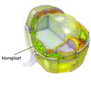 Bitki Hücre Kısımları