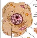 Hücrenin ana bölümleri resim