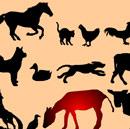 Hayvanlar ve Sesleri