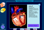 Dolaşım Sistemi Ve Organları