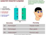 Genotip fenotip ilişkisi