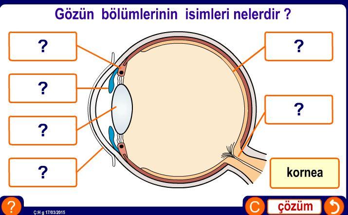 Gözün bölümlerinin isimleri nedir ? Etkinliği