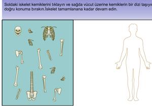 iskelet Sistemi Kemiklerini  Yerleştirme Oyunu