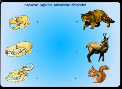 Hayvanların Kafatası Farklılıkları