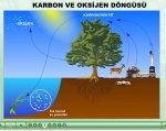 oksijen ve karbon çevrimi