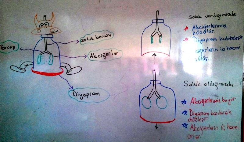 Akciğerimiz ve görevleri