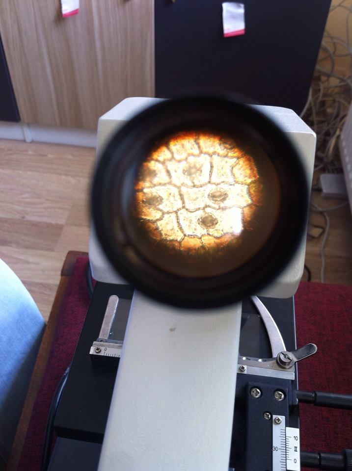 Bitki hücresi mikroskop görüntusü