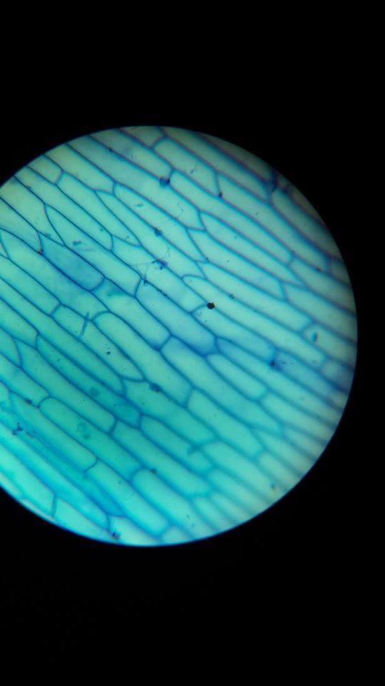 Bitki hücresinin mikroskop görüntüsü