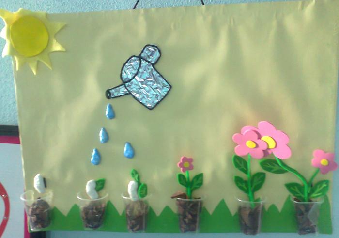 Çiçekli bitkilerde tohumdan çiçeğe