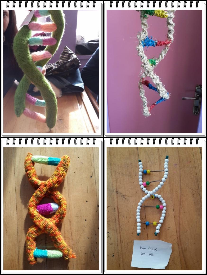 DNA modelleri 1