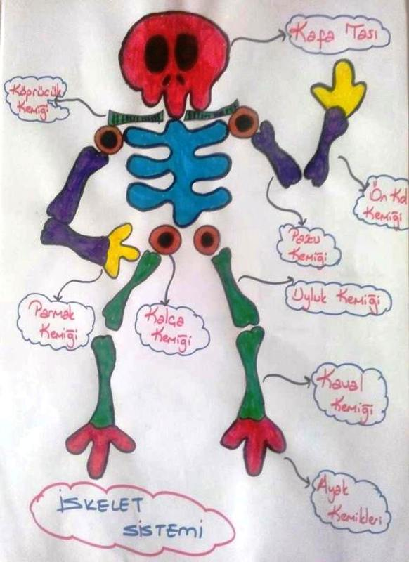 Destek ve hareket sistemimizdeki kemikler