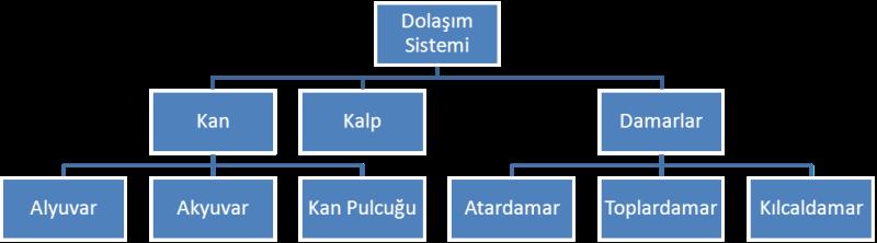 Dolaşım Sistemi ve Bölümleri