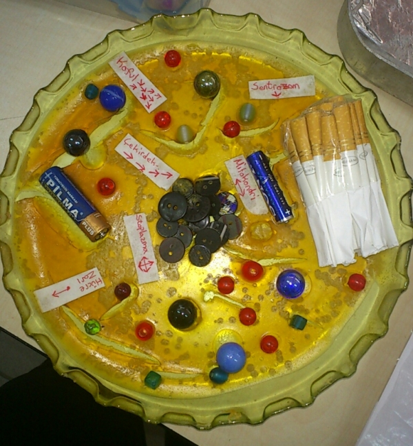 Hayvan Hücre Modeli