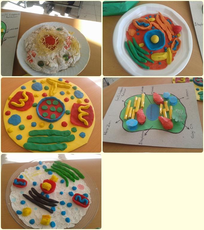 Hücre Modelleri