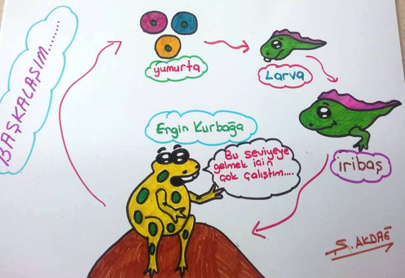 Kurbağada Başkalaşım