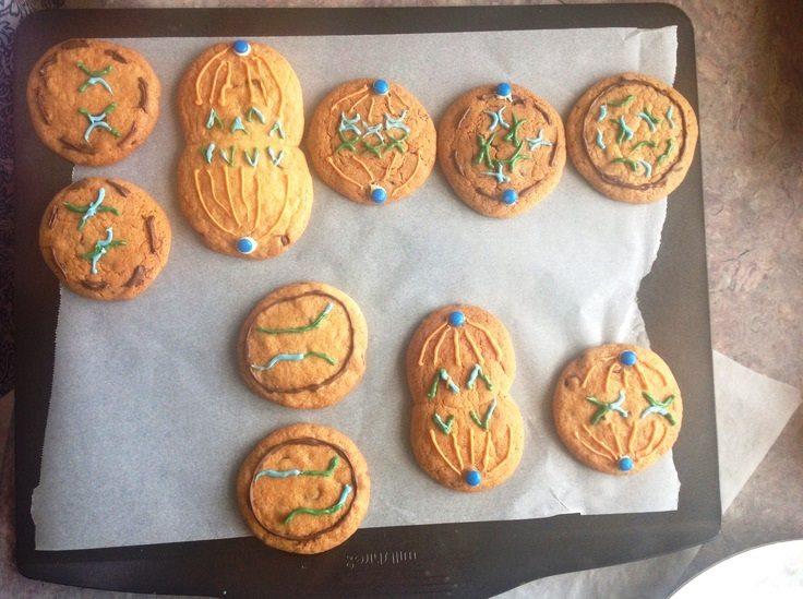Mayoz bölünme kurabiyeleri