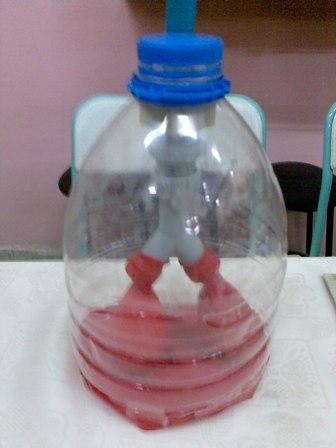 Akciğer Modeli Solunum Sistemi