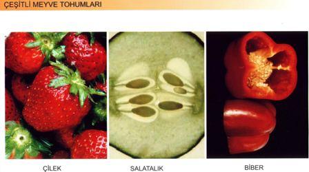 Bitkilerde Çeşitli Meyve ve Tohum
