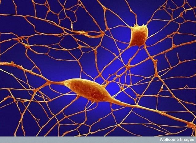 Sinir Hücresi