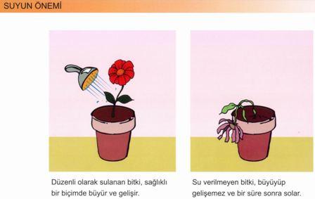 Bitkilerin Büyümesinde Suyun Önemi