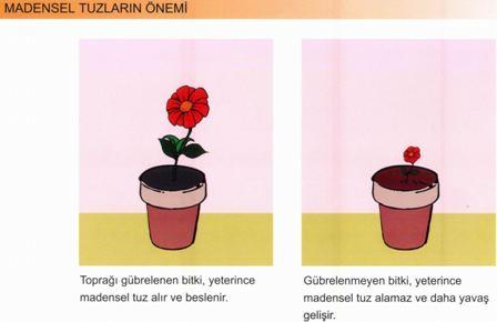 Bitkilerin Büyümesinde madensel Tuzların Önemi