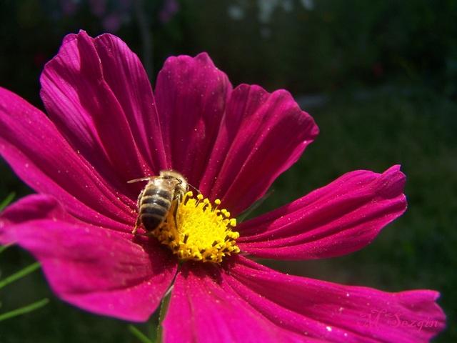 Çiçekte Tozlaşma