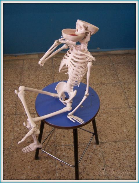 �skelet Sistemimiz