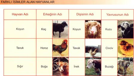 Farklı İsim Alan Hayvanlar