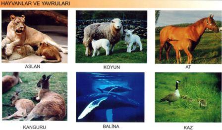Hayvanlar ve Yavruları