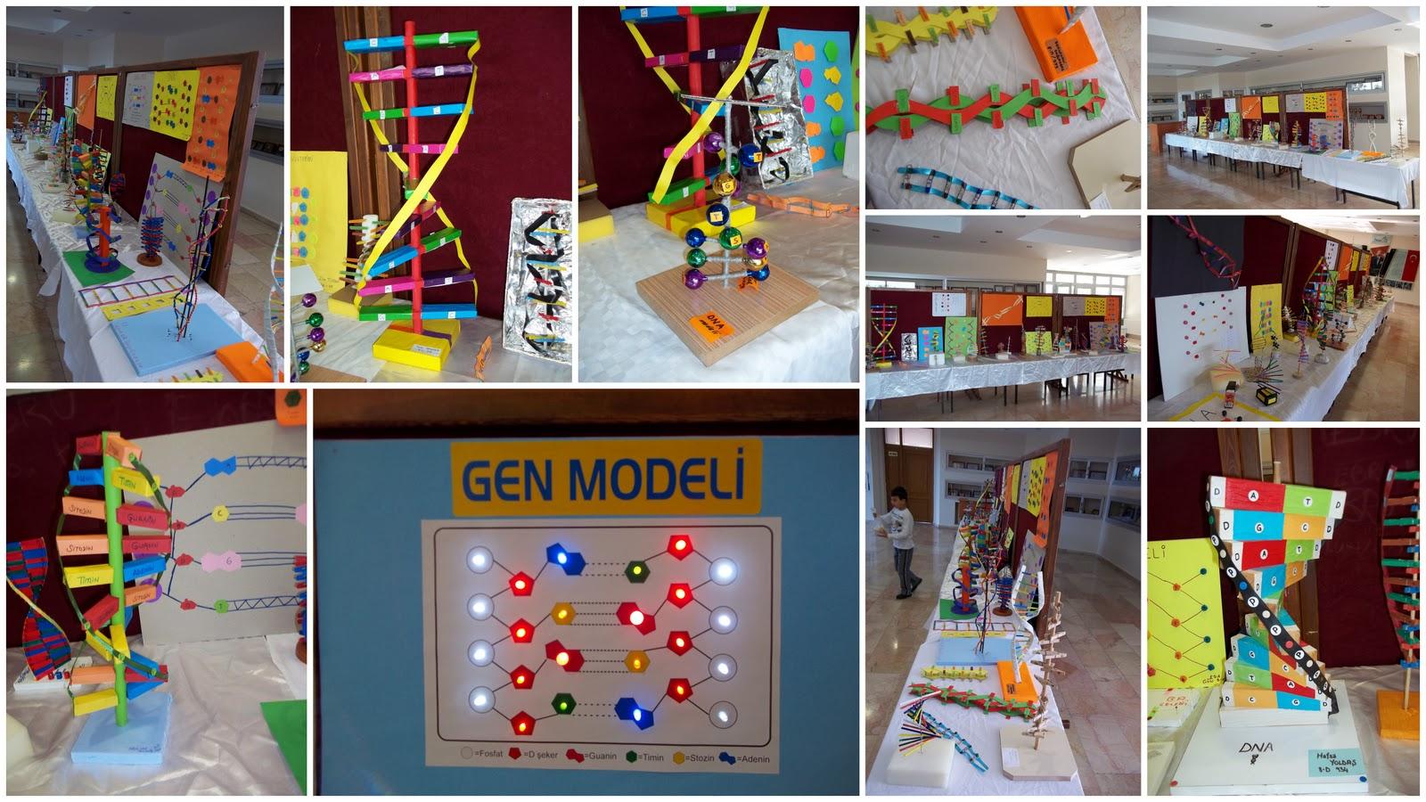 DNA modeli yarışması