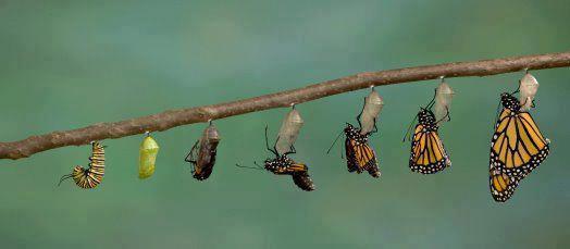 Kelebeklerde Puplasma