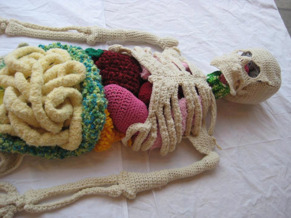 Örme iskelet ve  iç organları