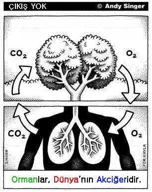 Ormanlar Dünyanın Akciğeridir.