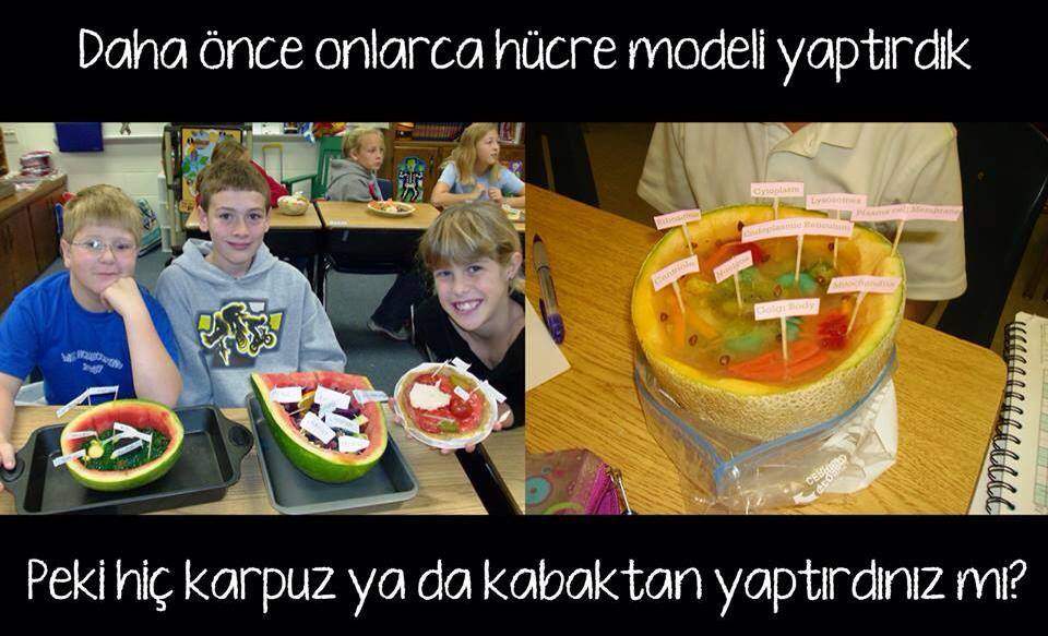 Karpuz ve Kavundan Hücre modeli