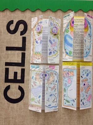 Bitki ve Hayvan Hücreleri Broşürleri