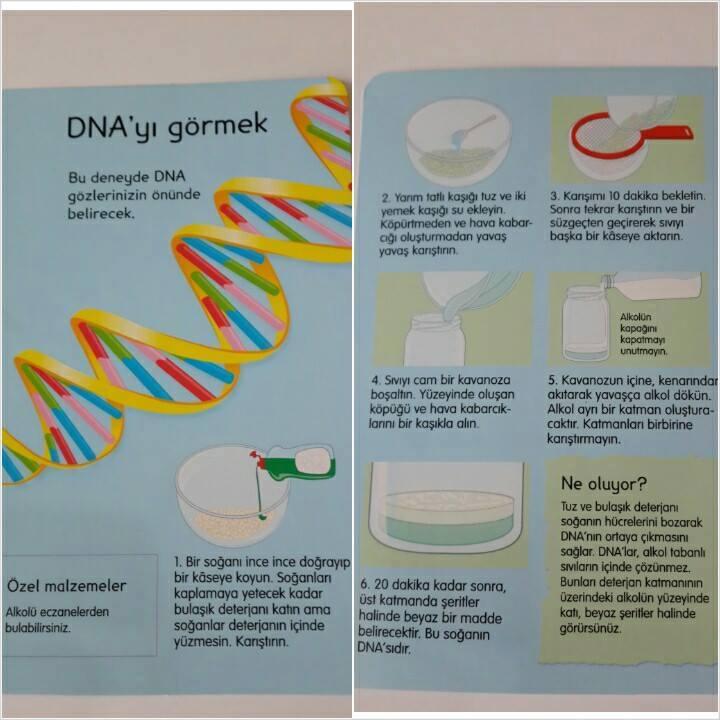 DNA Görmek