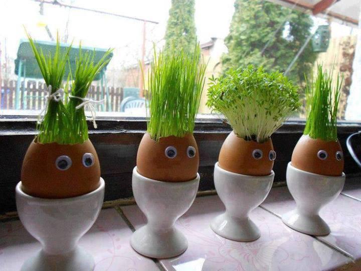 Yumurta kabuğunda çimlenme...