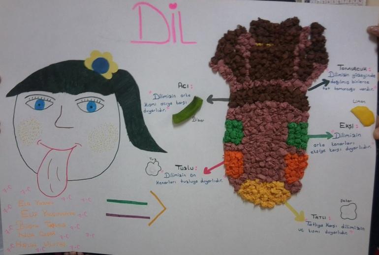 Dil modeli