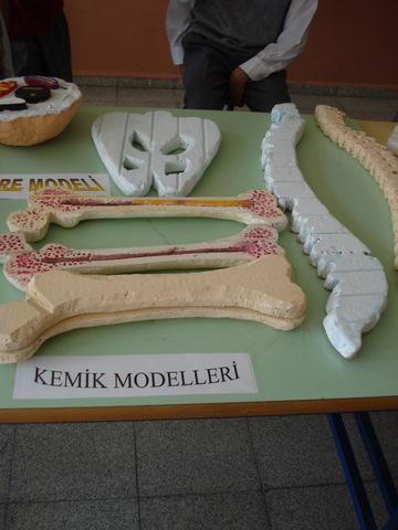 Kemik Modelleri