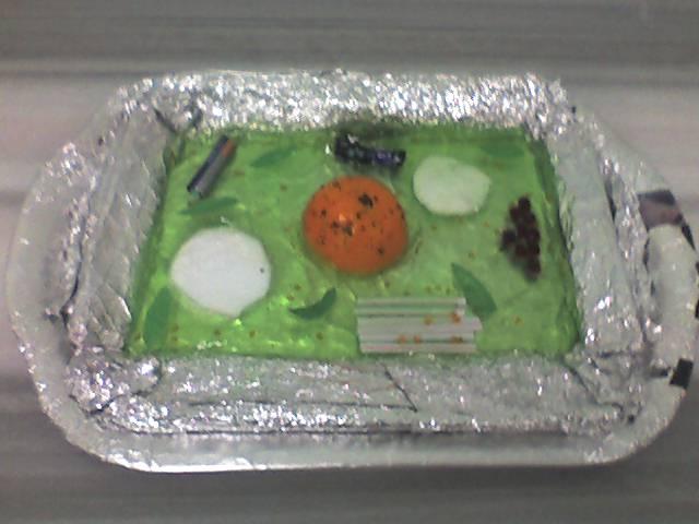 Bitki Hücresi ve Yapısı