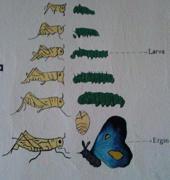 Kelebek ve �ekirgede Ba�kala��m
